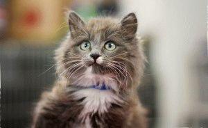 Имена-для-котов