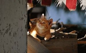 Какие травы отпугивают котов