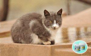 Чем лечить лишай у котенка