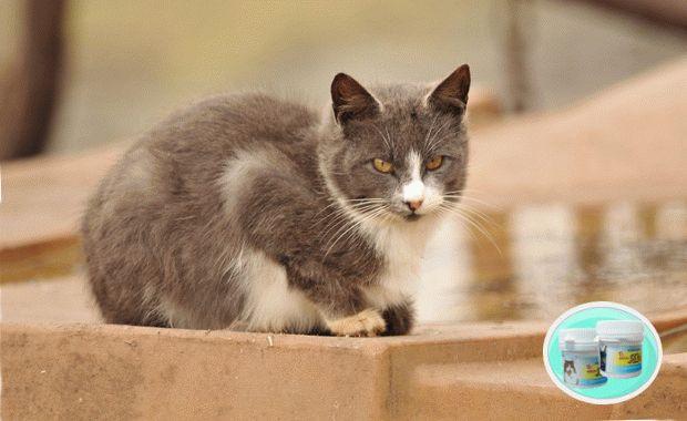 аллергия на разных кошек