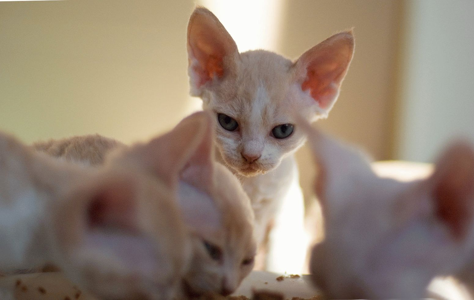 фото про котят
