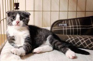 Кошки и котята в Ижевске  купить на доске объявлений