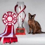 Питомник бурманских кошек«Octarine»