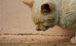 Сердечный приступ у кота что делать 114