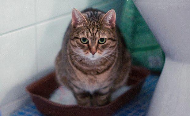 Кашель у кошки причины | Мои домашние питомцы