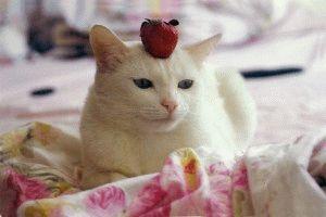 Белая кошка фото