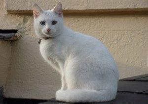 Белый кот фотография