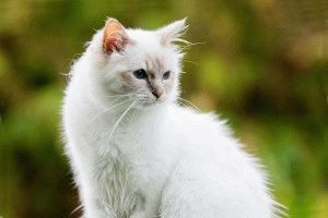 Белый кот фото
