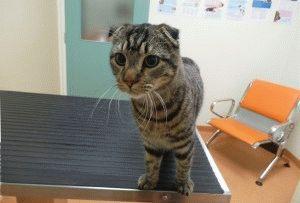 Больного кота кастрировать