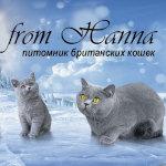Питомник британских кошек «From Hanna»