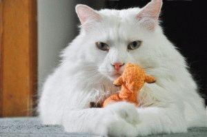 Фото белого кота
