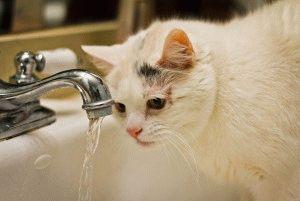 Фото белой кошки