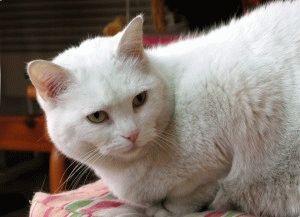 Фото белых котов