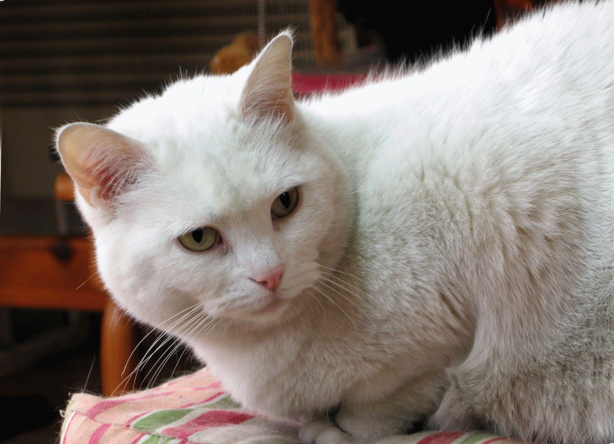сайт знакомств кошек и котов