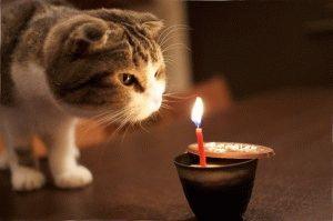 Фото вислоухого кота смешное
