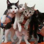 Какие прививки нужно делать котятам