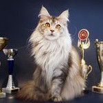 Питомник кошек Мейн-кун «Кунокаста»