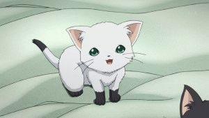 Картинки аниме кошек