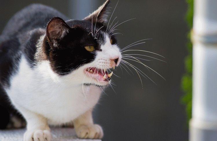 Виды и причины агрессии у кошек