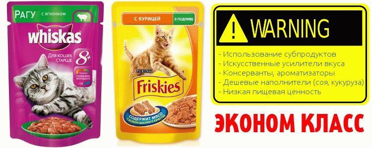 Можно ли давать кошкам сухой корм