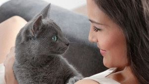 Порода кота из рекламы Шеба