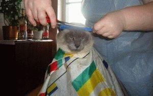Стрижка кошки в домашних условиях