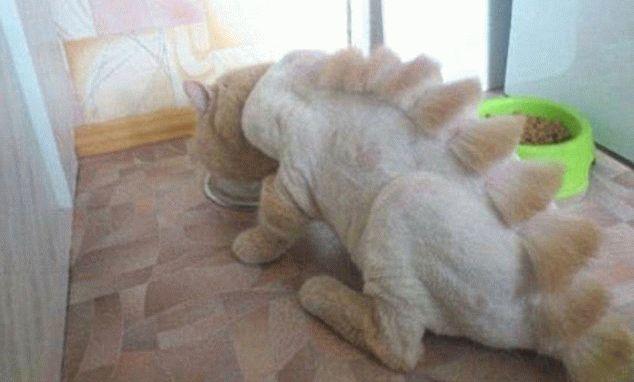 Стрижка шерсти у кошек