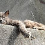 Успокоительное для кошек
