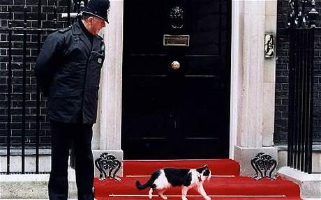 Кот и полицейский