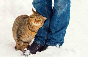 Кот трется о ногу