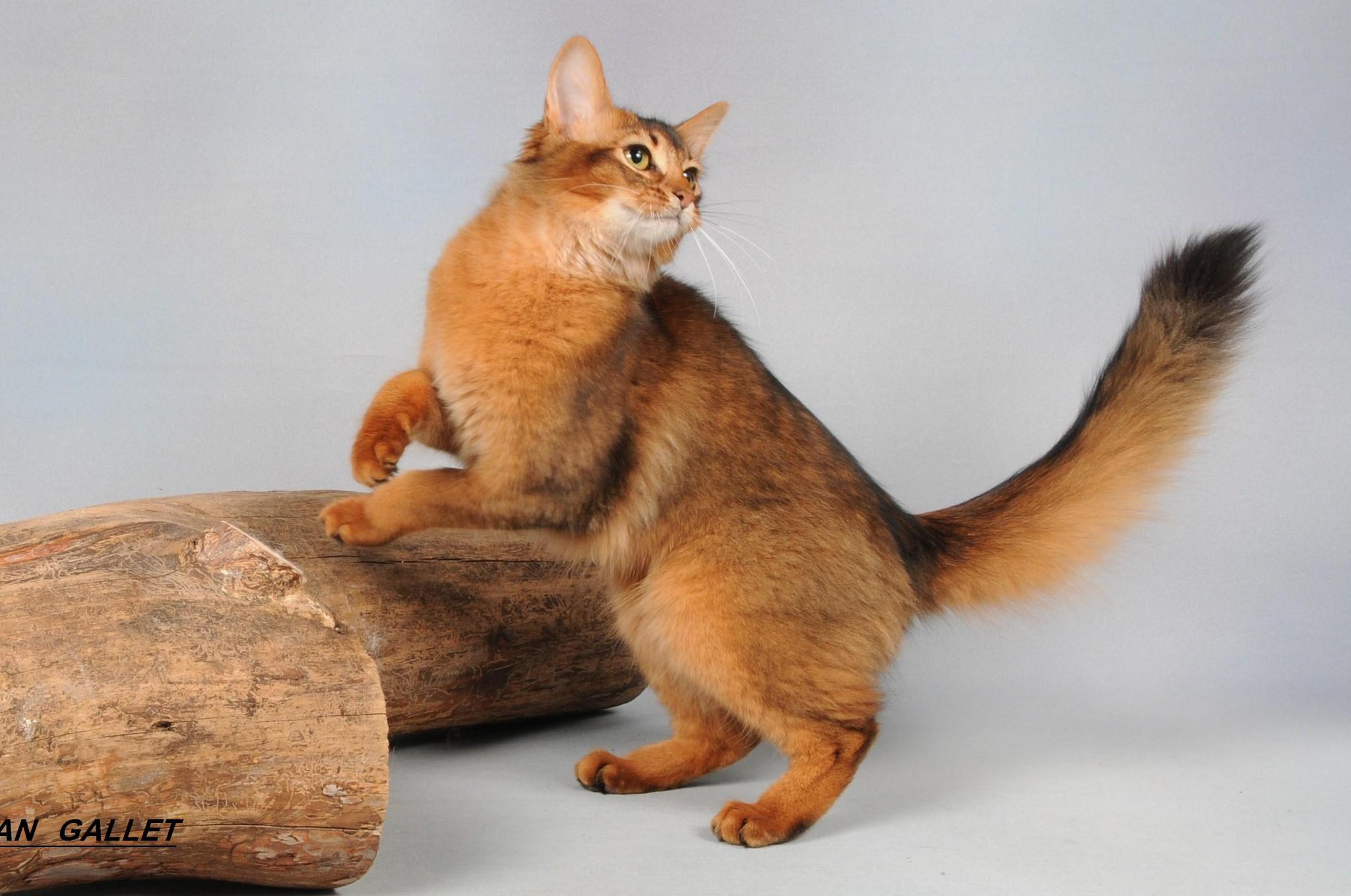 Как кошку сделать красивой фото 324