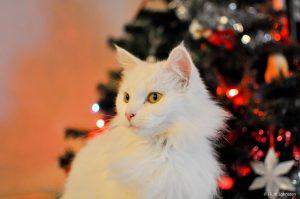 Черно белые кошки порода