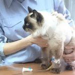 Почечная недостаточность у кошек: симптомы и лечение