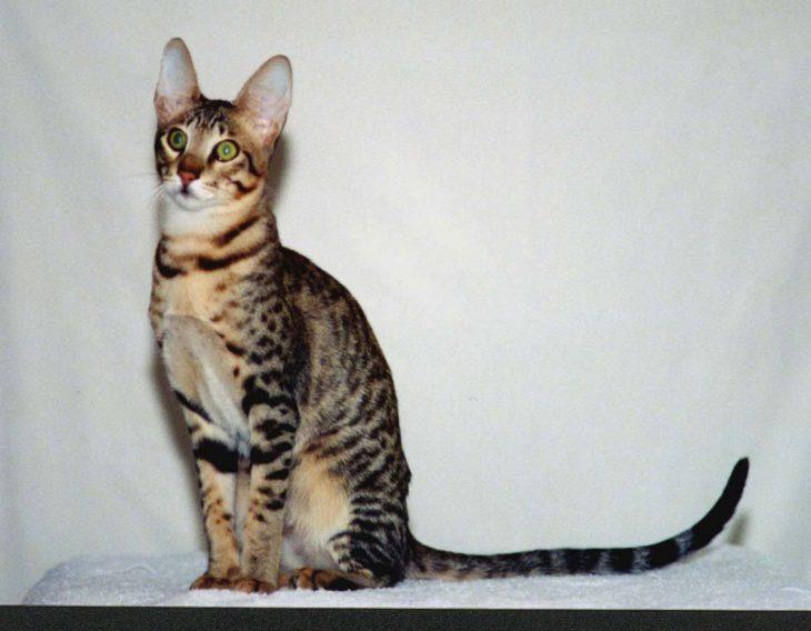 Пятнистые кошки - Серенгети