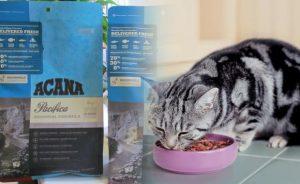 Как выбрать полезный корм для кошки