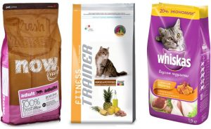 Каким сухим кормом кормить кошку