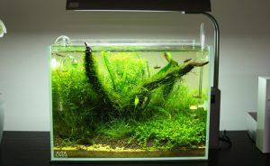 Рыбки в мини аквариуме: содержание и уход