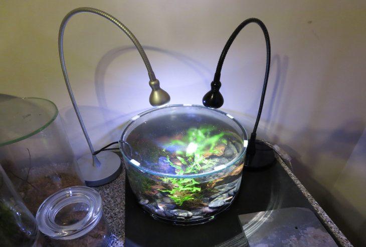 Рыбки в мини аквариуме - уход и содержание