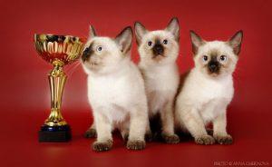 Выставка кошек в Москве 2017 расписание