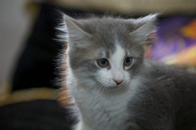 Как назвать котенка мальчика