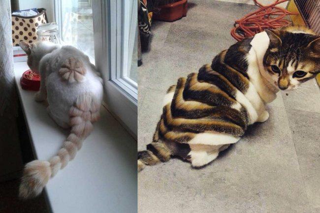 Примеры стрижек кошек - фото 2