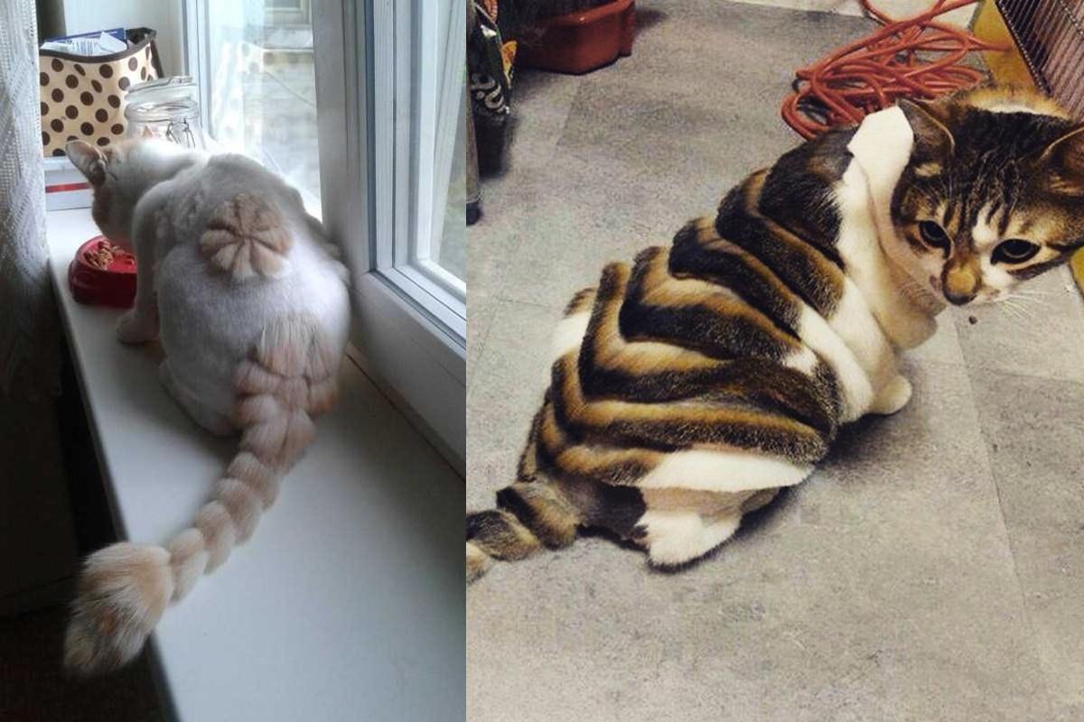 прически котов для животных минск с фото