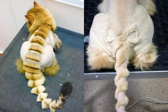 Примеры стрижек кошек