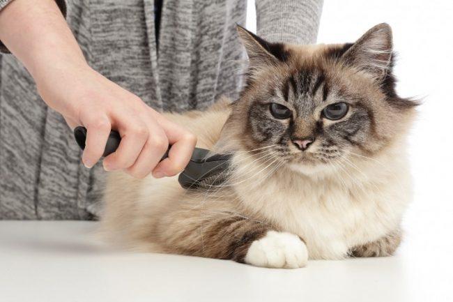 Сколько стоит стрижка кошки в салоне
