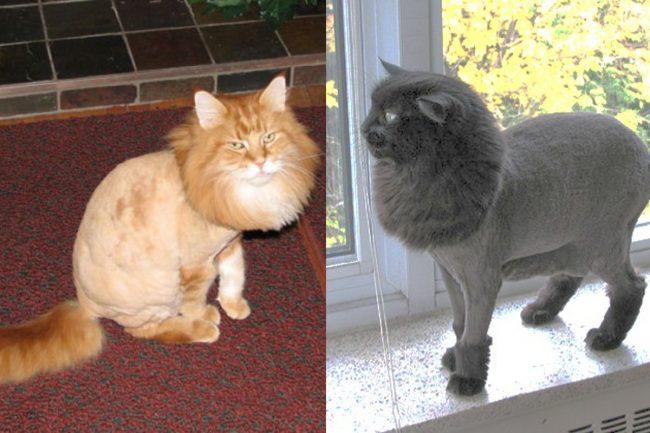 Стрижки котов под льва - фото 2