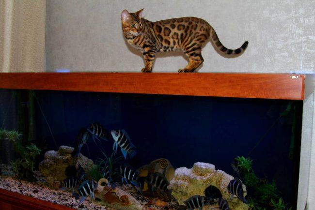 Защита аквариума с рыбками от кошки