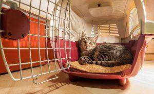 Какой должна быть переноска для кошек в самолет