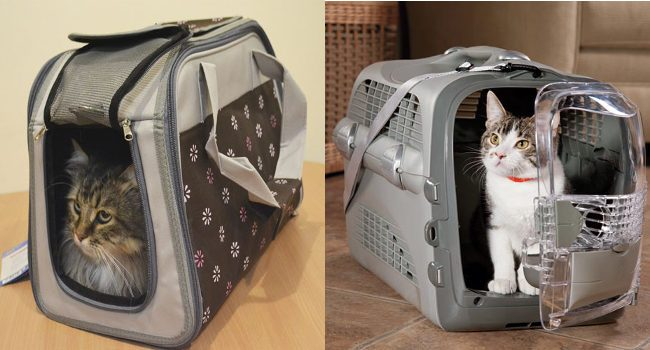 Какой должна быть переноска для кошки в самолет