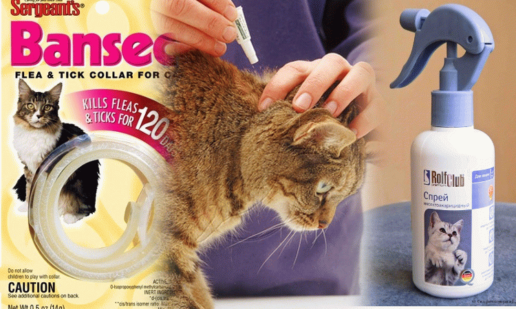 Як вивести блохи у кота