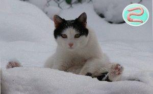 Як вилікувати глисти у кота